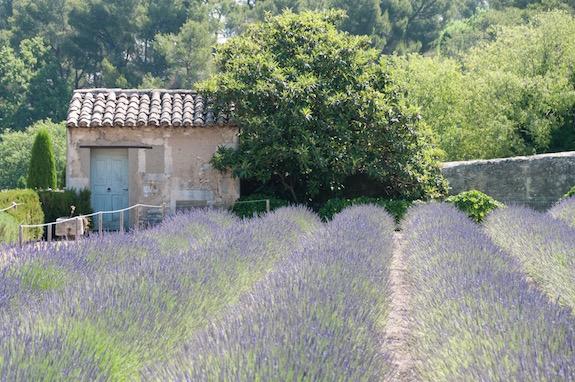 Janelle-Gould-Saint-Rémy-de-Provence-Lavender-St-Paul-My-French-Life™
