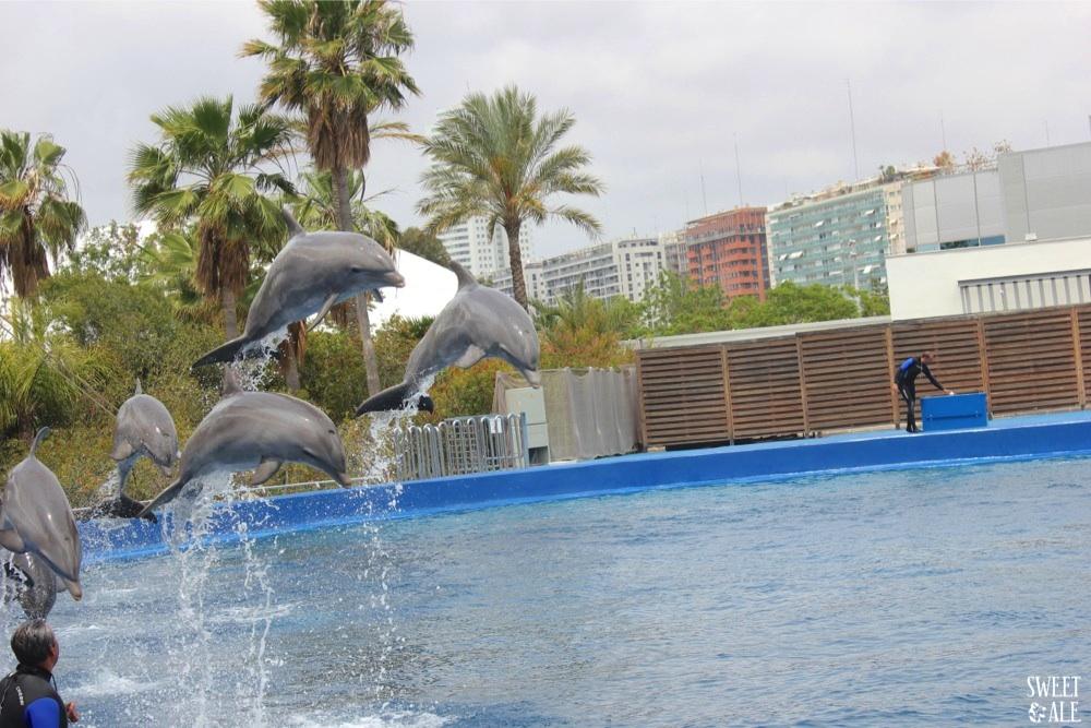 espectaculos delfines