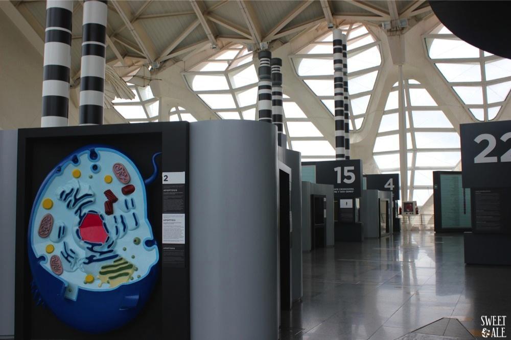 interior museo de las ciencias