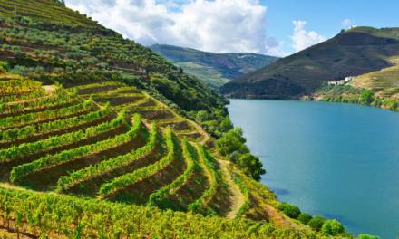Planes y rutas por la región del Duero
