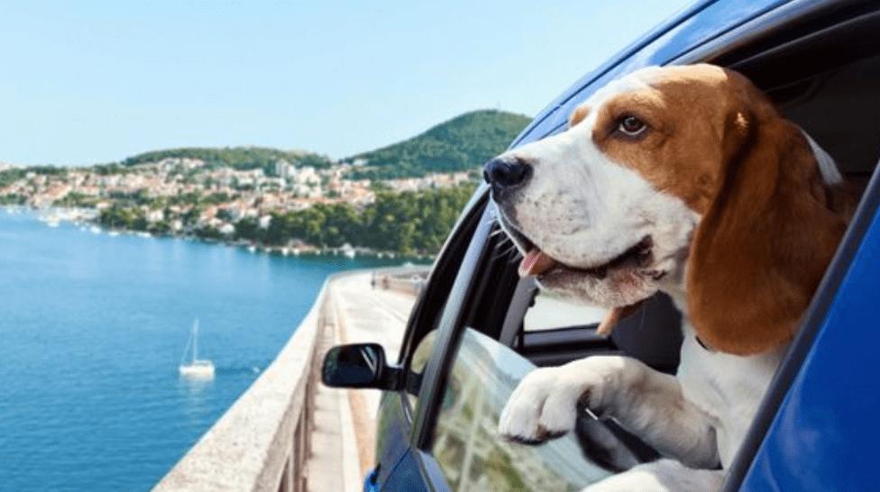 5 Consejos Prácticos Para Viajar Con Tu Mascota